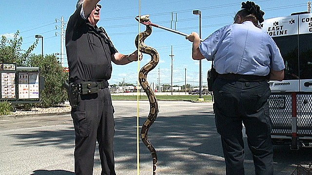 pkg 6 foot snake found outside burger king_00005108.jpg