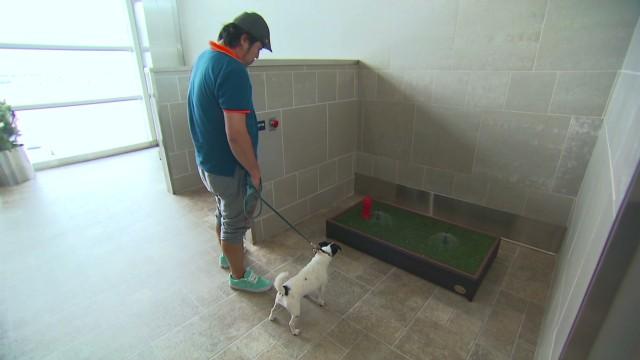 Detroit Doggie Relief_00012712.jpg