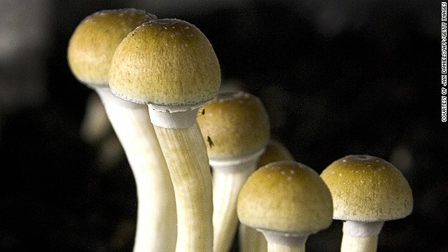 "Scientists are researching medical benefits of psilocybin, which is found in ""magic mushrooms."""