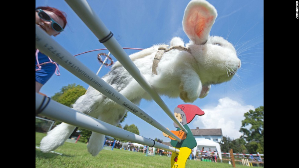 Luisa Riedel's rabbit, Lenny, jumps during the Kaninhop competition in Weissenbrunn vorm Wald, Germany, on Sunday, September 7. Obstacles in the rabbit-jumping event can reach as high as 40 centimeters (15.75 inches).