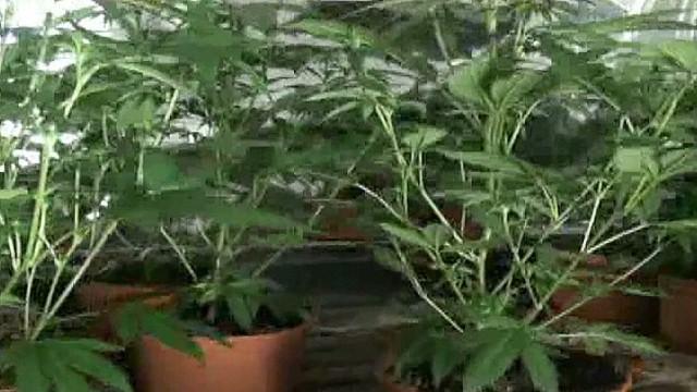 cnnee villanueva costa rica marihuana licit _00000511.jpg