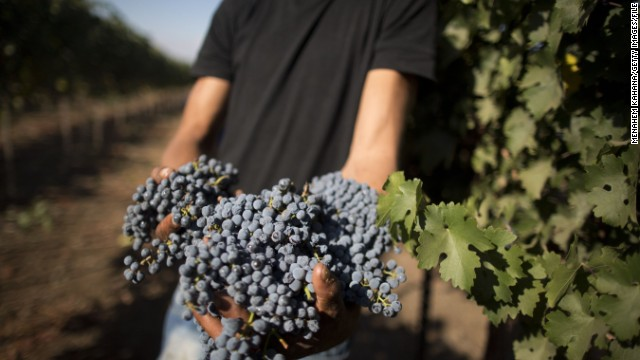 An Israeli-Arab farmer harvests grapes for the Bazelet Hagolan Winery in the Golan Heights in 2012.