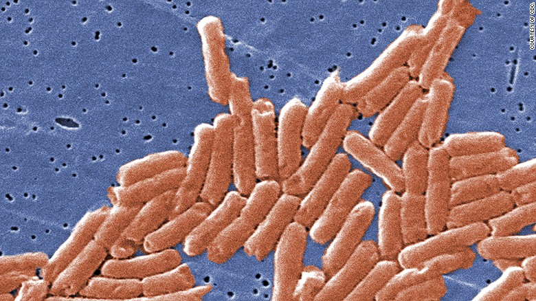 Salmonella 101: What you need to know