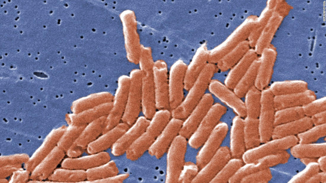 In general, food should be reheated until it's steaming hot, as this kills off germs that reappear after food has cooled. Pictured, salmonella bacteria.