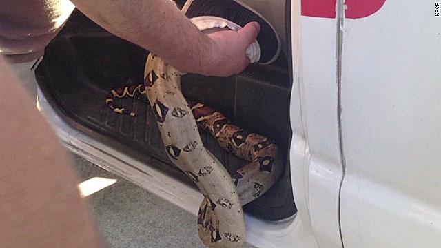 dnt snake found in uhaul_00003908.jpg