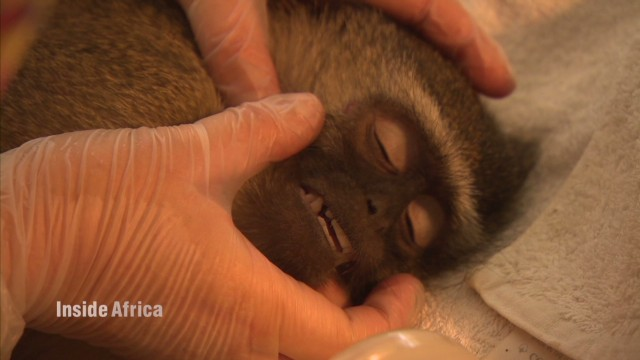 Wildlife sanctuary saves orphaned animals