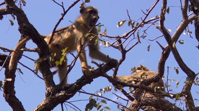 spc inside africa malawi wildlife sanctuary b_00035729.jpg