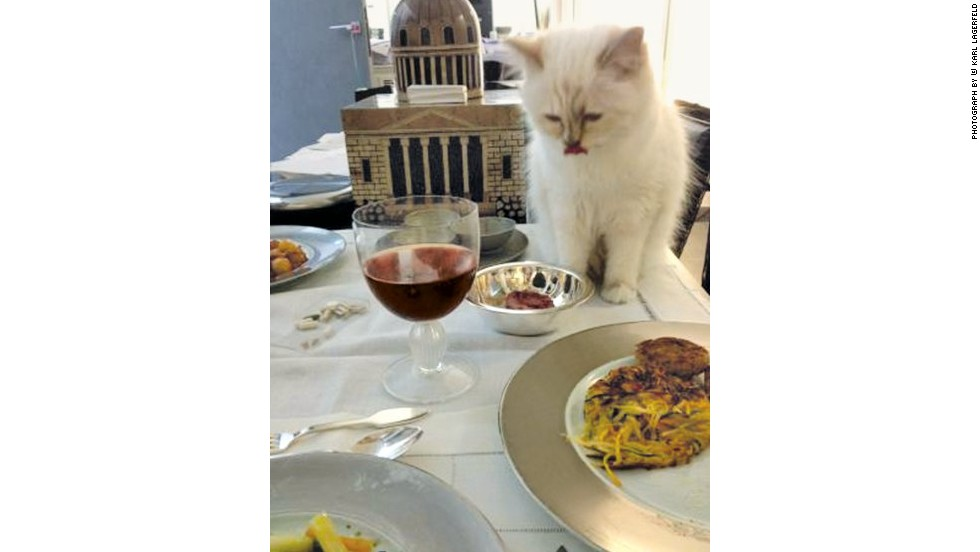 When she is at home, Choupette can rely on the the services of her personal chef Patrice but in the glamorous world of fashion invitations to dine out are plentiful, and she has also been spotted at some of the finest establishments in Paris. Chefs in prestigious Parisian restaurants like Cafe de Flore have even created special dishes just for her, like Croquettes a la Choupette, and Choupette's Egg from Le Voltaire. <br /><br />However, her personal medical consultant is quick to point out that caviar should be limited to the tiniest portions as it contains too much fat and salt.