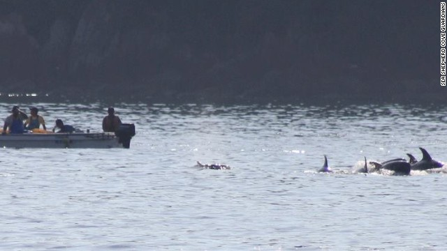 Dolphin hunting season begins in Japan