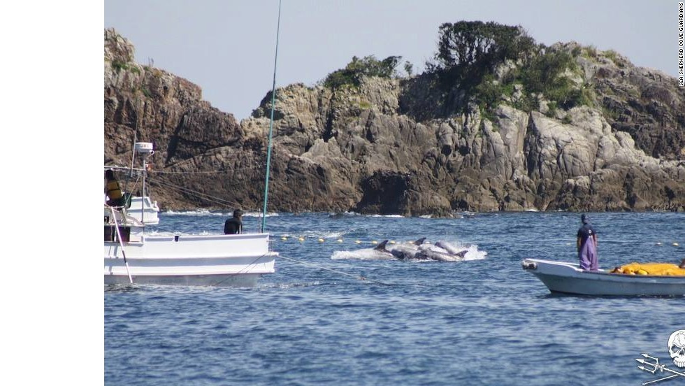 Hunters approach a family of dolphins in Taiji, Japan.