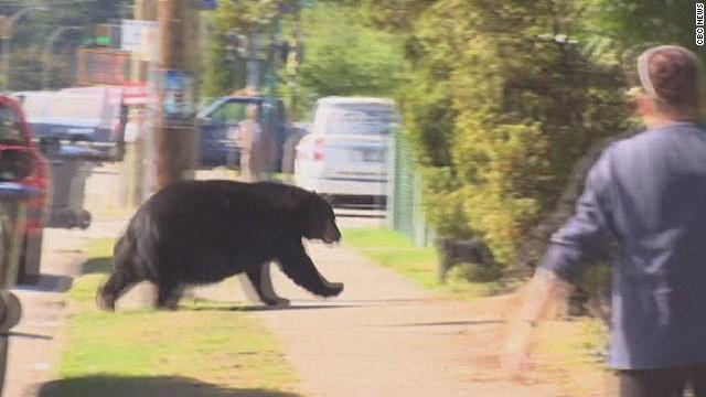 dnt can bear wont leave neighborhood_00011811.jpg
