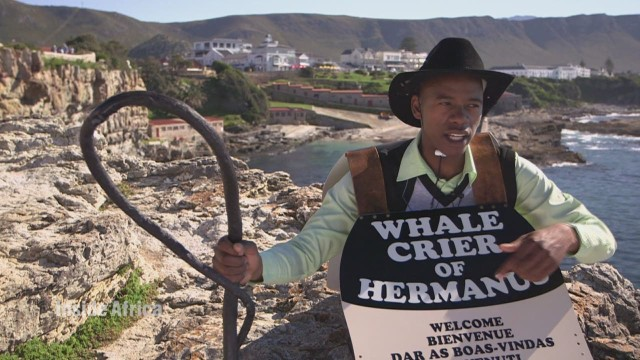 Whale crier shares tricks of the trade