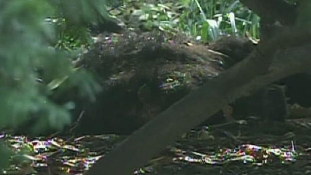 ny vo sot dead bear found in central park _00000803.jpg