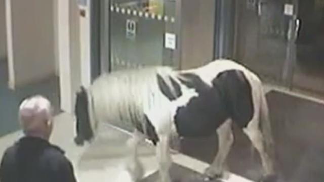 pony walks into a police station newday_00002323.jpg