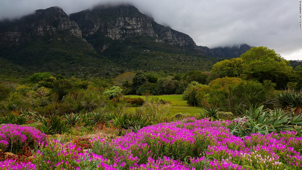 Cape Town's Kirstenbosch National Botanical Garden, on the slopes of Table Mountain.