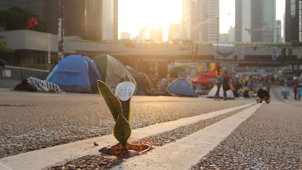 "OCTOBER 15 - HONG KONG: A Mother-in-Law's Tongue plant is placed on a road as pro-democracy demonstrators sleep in tents on a major east-west thoroughfare which usually carries buses, cars and trams on October 14. <a href=""http://cnn.com/2014/10/15/world/asia/hong-kong-police-protest-video/index.html"">Since late September,</a> protesters have been demanding a greater say in who leads Hong Kong, a Special Administrative Region of China."