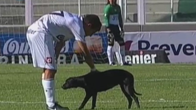cnnee invade dog on field_00000606.jpg
