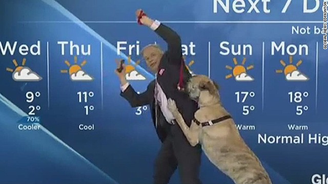 newday dog weatherman hit_00002707.jpg