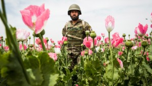 Opium fuels the stalemate in America's longest war