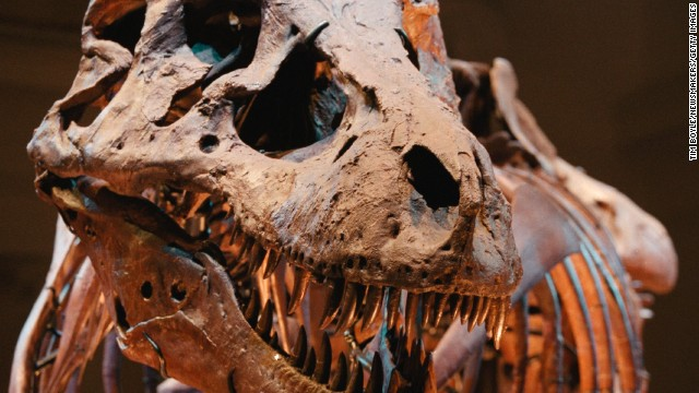 Sue, the largest and most complete Tyrannosaurus rex ever found, is shown on display May 17, 2000 at the Field Museum in Chicago