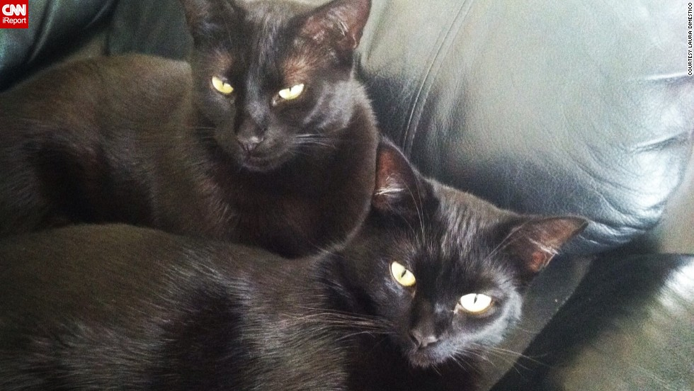 """Superstitions never gave me pause, so silly in my opinion,"" says Laura DiMestico of her two black cats, <a href=""http://ireport.cnn.com/docs/DOC-1181718"">Bagheera and Vader</a>. ""They are truly the most playful and snuggly, loving cats I have ever had."""