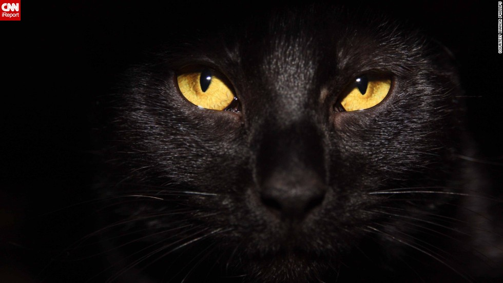 "Black cats may face unusual struggles in their lives, but they sure make their families feel lucky to have them! Click through the gallery to meet some of our readers' favorites and get their tips for photographing your dark-furred feline.<br /><br />Bianca Phillips says that patience is key when photographing pets, such as her cat <a href=""http://ireport.cnn.com/docs/DOC-1181421"">Kiki</a>. ""Have lots of treats and toys ready,"" she suggests."