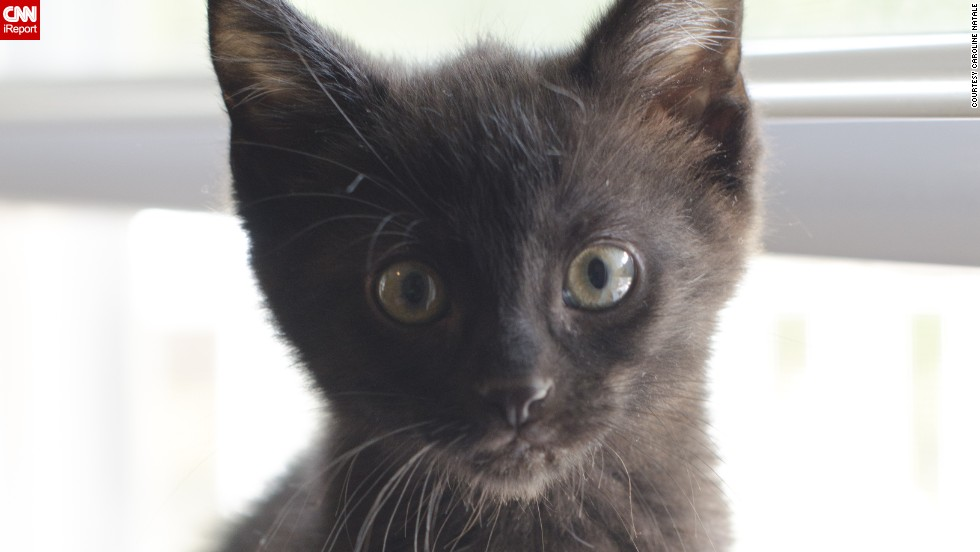 "<a href=""http://ireport.cnn.com/docs/DOC-1181858"">Pepper</a> came to live with Caroline Natale's family after Natale's 7-year-old daughter specifically requested a black cat. <br /><br />""Shoot them in as bright a setting as possible,"" Natale recommends, ""or you will just see a black blob and eyes."""