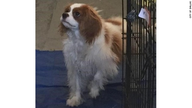 Bentley, the dog of nurse Nina Pham, has been cleared of Ebola.