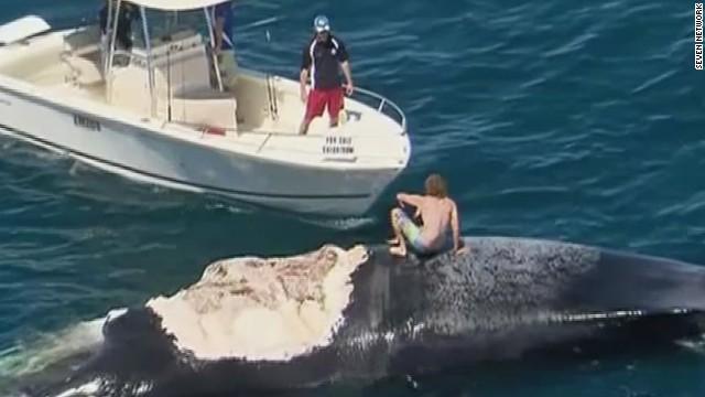 pkg australia man rides dead whale_00010830.jpg