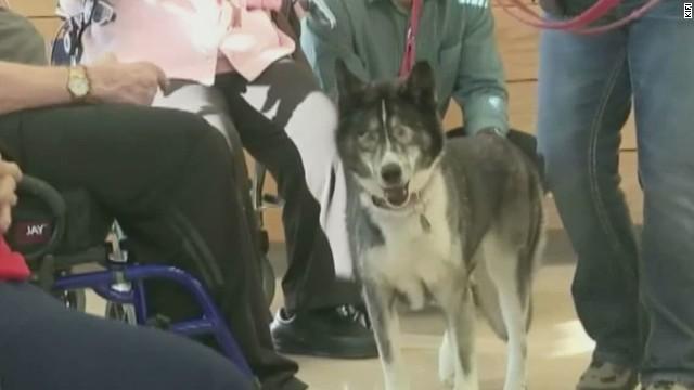pkg blind sled dog racing_00005026.jpg