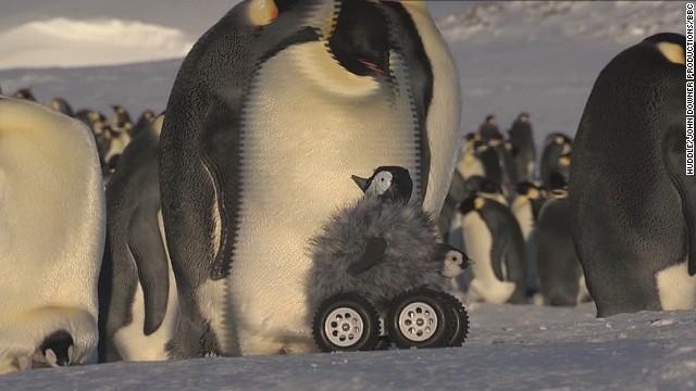 erin pkg moos fake penguin robot_00001210.jpg