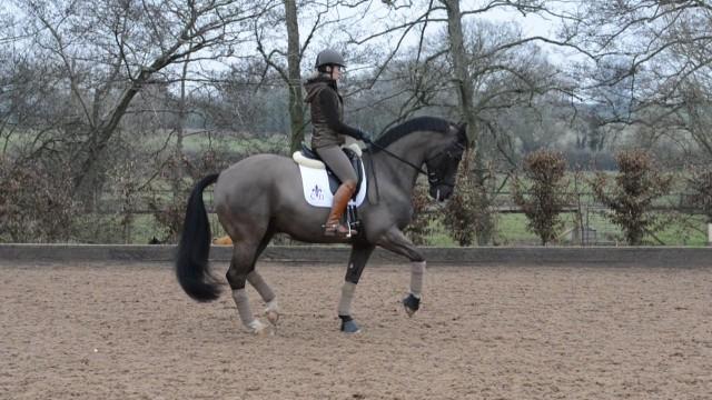 scp CNN Equestrian Dressage Guide_00013109.jpg