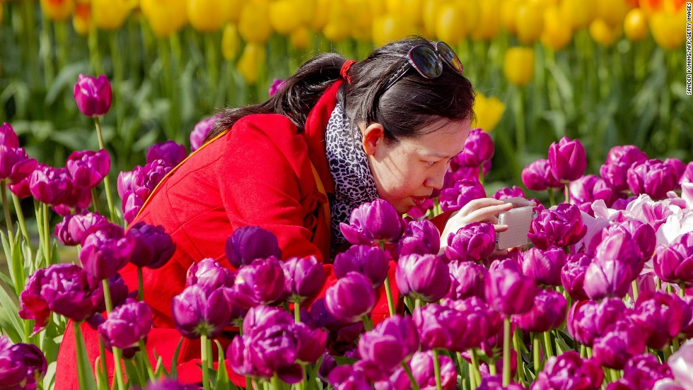 Few tulip varieties are fragrant, but other flowers at the Netherlands' famed Keukenhof garden -- the world's second largest flower garden -- compensate sweetly.