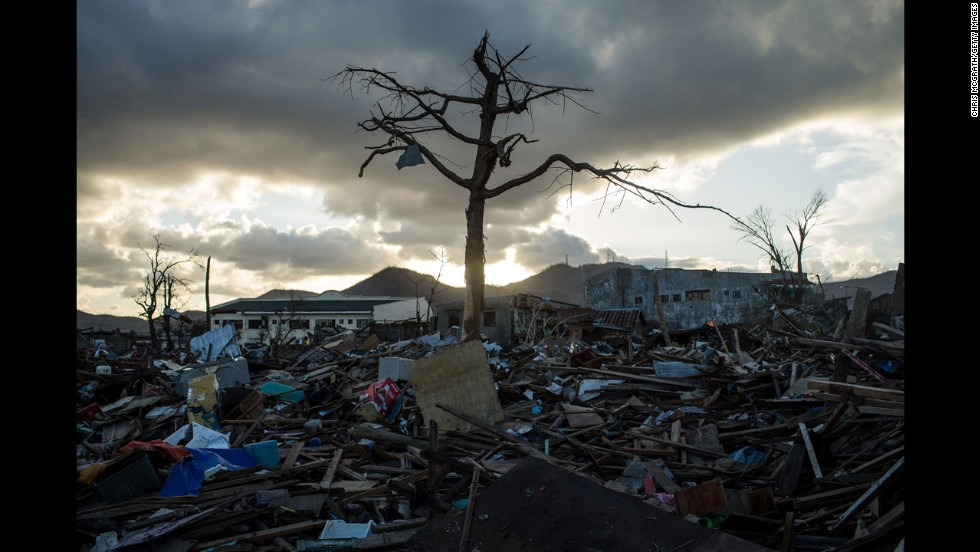 A single tree is left standing amid the rubble in Tacloban City  on November 18, 2013.