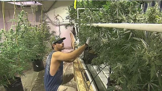 erin dnt mattingly kettle falls 5 marijuana_00020312.jpg