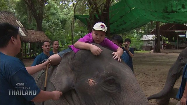 Elephants provide therapy for autistic