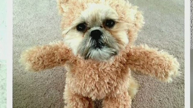 erin pkg moos teddy dog_00020513.jpg