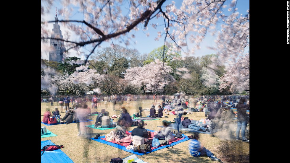 During the cherry blossom festivities, the whole city stops to come together and celebrate.
