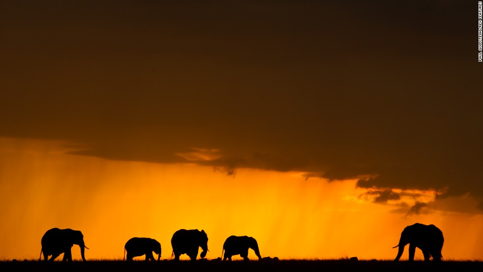 "The fight to save the elephants ""shows that we cherish the world and appreciate its complexities,"" says Leakey. ""It's essential to preserving the biodiversity of our world and to continuing our ongoing understanding of its evolution -- how we became what we are today."""