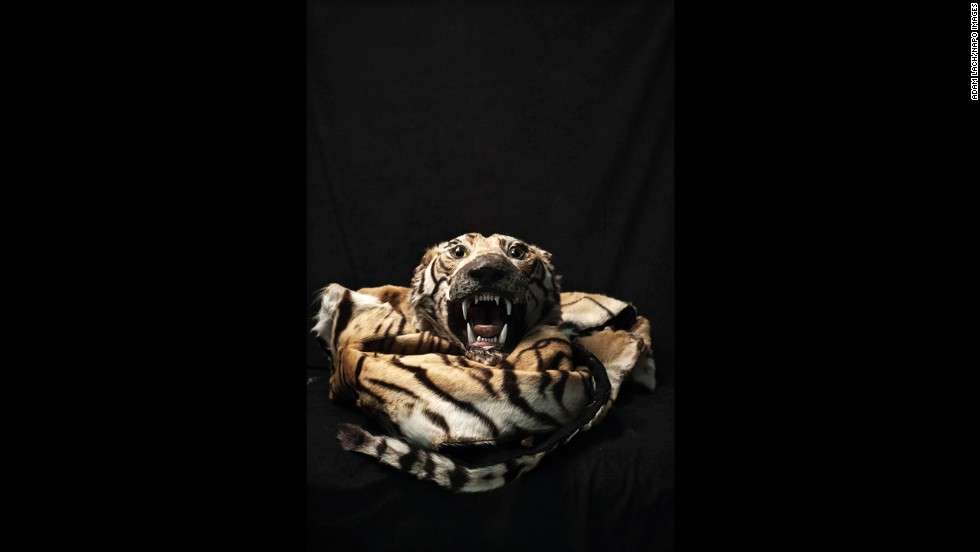 "A tiger skin is among the illegal items that have been confiscated over the years at Warsaw Chopin Airport in Warsaw, Poland. Photographer Adam Lach recently documented some of the items as part of his project ""Human Tsunami."""