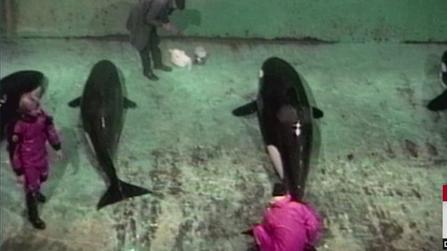 Rare video shows killer whale capture