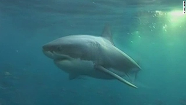 pkg great white shark found near australian beach_00010014.jpg