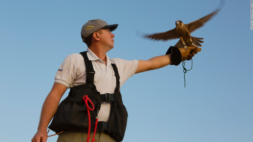 Falconry displays are part of the experience. Trained birds swoop low over heads, ruffling hair with their large wing beats but never touching spectators.