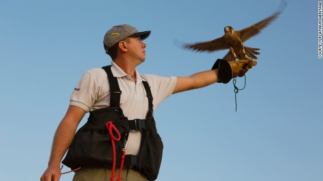 A demonstration featuring birds of prey is part of the experience.