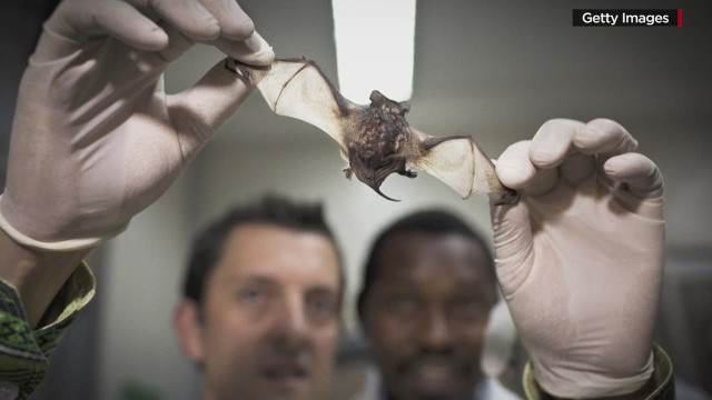 sgmd gupta daszak ecohealth ebola_00004722.jpg