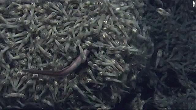 NASA extreme shrimp alien life_00013508.jpg