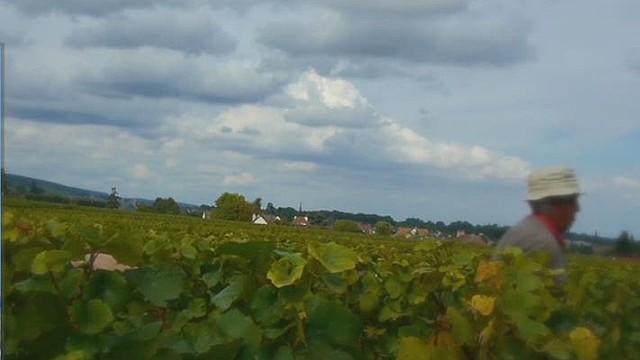 wbt winemaker looks for shareholders_00012016.jpg