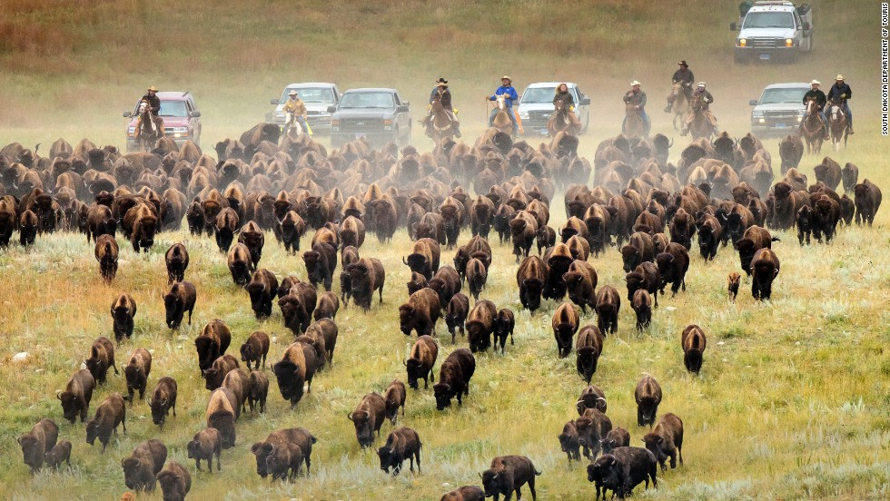 2. A stunning natural wonder where the buffalo roam, western South Dakota has much to celebrate in 2015. It's the 50th anniversary of the annual Custer State Park Buffalo Roundup and the 75th anniversary of the Sturgis Motorcycle Rally -- the largest in the world -- where 500,000 motorcycle enthusiasts meet annually.