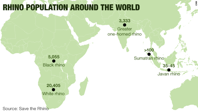 Rhino population around the world