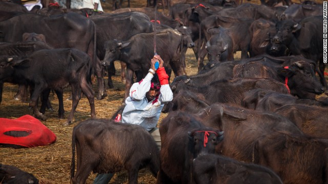 Ritual slaughters thousands of animals